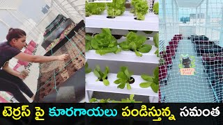 Samantha Akkineni shares video, pics of her terrace vegeta..