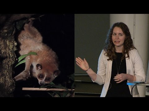The Search for Slow Lorises - AMNH SciCafe