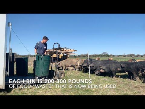 TerraPurezza Regenerative Farm - Volunteer Ben Rich