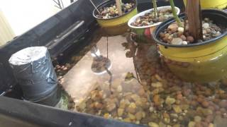 Indoor Aquaponics - PVC and Duct-tape Bell Siphon + Adjustable Water Depth