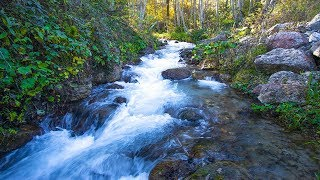 River Water Sound Forest Stream Fresh Clear Water - Relaxing Walk Into the Woods