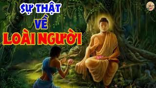 4 Sự Thật Của LOÀI NGƯỜI khiến chúng ta không khỏi CHẠNH LÒNG   Nhân Quả Luân Hồi