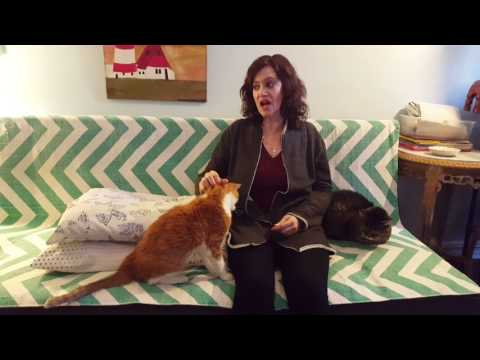 Sue Pike The Animal Talker® channeling Stan the Cat