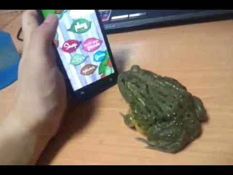 Nie drażnij żaby!