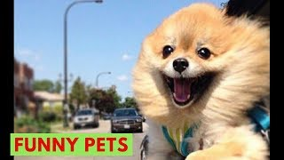 Funniest Confused Pets Compilation 2018   Try Not To Laugh/ Pet Training Online #24
