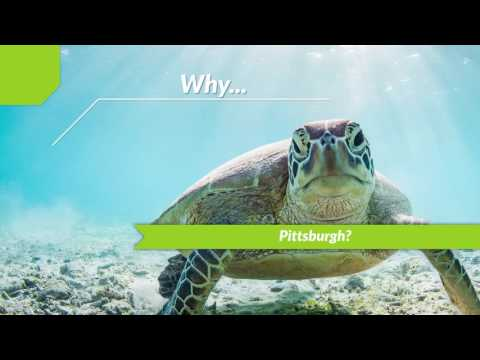 Sea Turtle Second Chance Program Overview | STEM Jobs