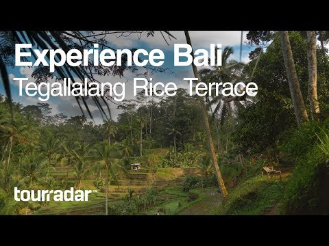 Experience Bali: Tegallalang Rice Terrace