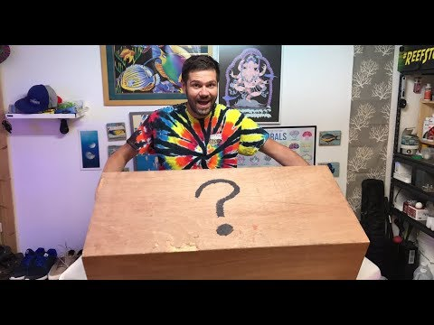 Big Crate Mystery Unboxing