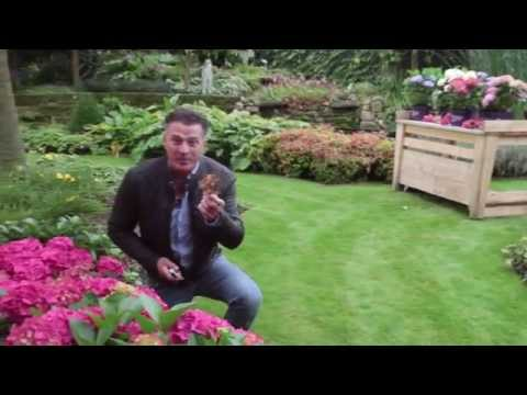 Forever&Ever Bloemen knippen hortensia