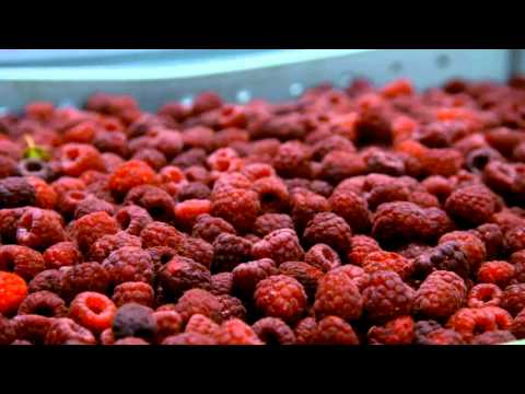 WaGrown Blueberries S3E2: Enfield Farms