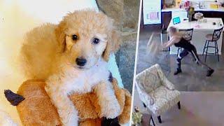 Pet Sitter Throws 10-Week-Old Puppy