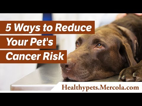5 Ways to Reduce Your Pet's Cancer Risk
