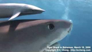 サメ接写2