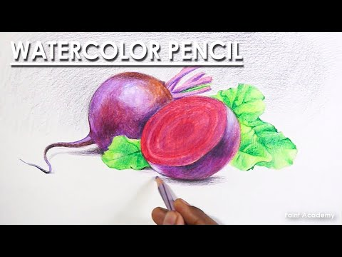 Watercolor Pencil Drawing : Still Life on Vegetables | Turnips