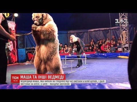 Ведмедиця Маша, яка напала на глядачів цирку, продовжує виступати на арені