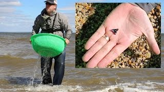 How to find fossils - Fossil hunting for shark teeth at Westmoreland State Park