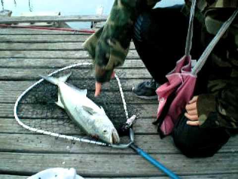 pesce serra a su sicu.AVI