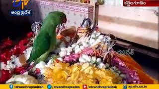 Parrot Visits Seetha Rama Kalyanam as Special Guest..