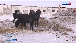 В Омском районе ввели карантин из-за анемии лошадей