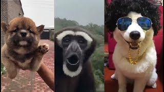 Animals Doing Things - Best Funny & Cute Pets - Dog & Cat Compilation - Try not to laugh #9