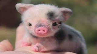 Cute Newborn Animals
