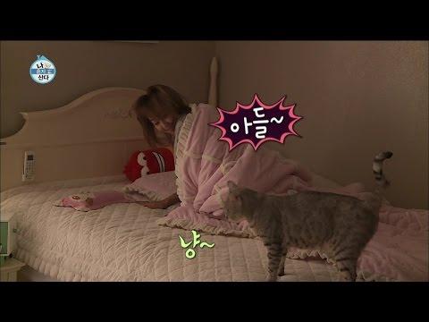 【TVPP】Hyorin(SISTAR) - Aegyo for Cats, 효린(씨스타) - 아들~ 잘 잤쪄? 어디에서도 볼 수 없었던 효린의 폭풍 애교 @ I Live Alone