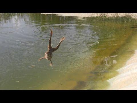 тепличный пруд саранск рыбалка