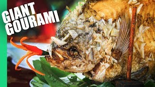 The Ultimate MEKONG DELTA Tour  | Eating a GIANT GOURAMI!!
