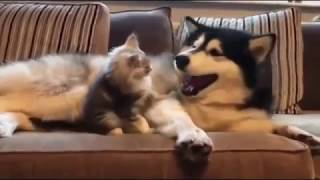 I WHINNYING TO TEARS   FUNNY ANIMALS   CATS DOGS