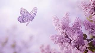 Beautiful Romantic Music: Relaxing Music, Piano Music, Violin Music, Guitar Music, Sleep   Part 240