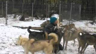 Perros de mushing