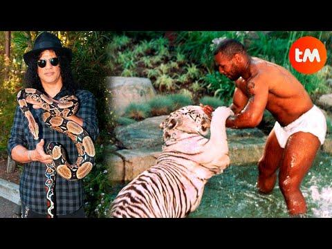 Мајк Тајсон чува тигар - најчудните миленици на славните