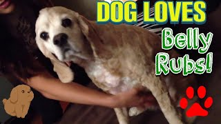 Cute DOG Getting RUBBED and Kicking his LEG