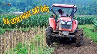 PHỤC SÁT ĐẤT KUBOTA M6040 CÀY RUỘNG GỐC NGÔ TRONG CHỚP MẮT may cay kubota tractor cuoc song mien nui