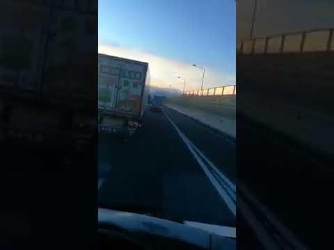 Cavallo al galoppo in autostrada sulla Napoli Salerno