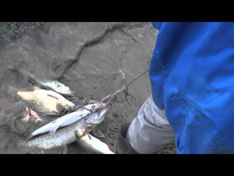 Рыбалка ! Небольшой улов