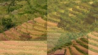 Cảnh đẹp của rừng núi Tây Bắc. Việt Nam