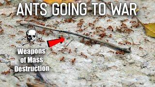 I Filmed Ants Going to War