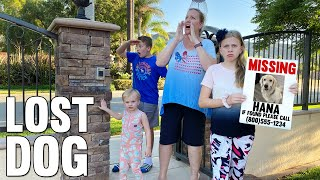 We Lost Our Dog on 4th of July! || Mommy Monday