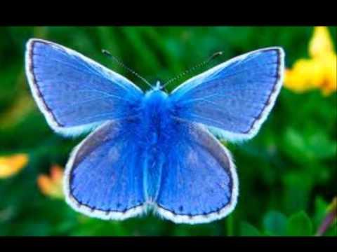 Les plus beaux papillons du monde youtube - Les plus beaux plafonds du monde ...