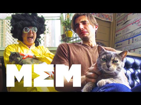 11 Ways to Pet Your Cat - FND Films on MEM - MEM  - uG587IYweIo -