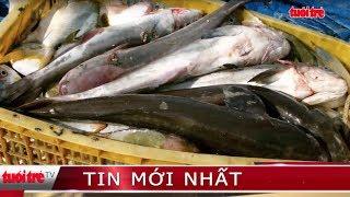 ⚡ Tin bão Damrey | Sau bão, ngư dân trúng hàng tấn cá từ lồng bè vỡ