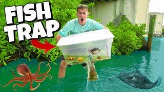 FISH TRAP CATCHES EXOTIC AQUARIUM FISH in HIDDEN MANGROVES!! (Find Your Own Bait Challenge)