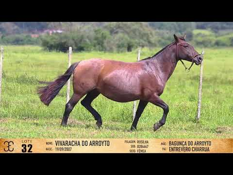 LOTE 32 - Vivaracha do Arroyto