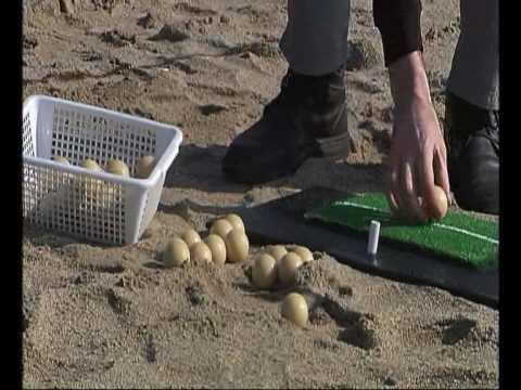 ALBUS GOLF (video 9) ECOBIOBALL: Jugar a golf, alimentar peixos