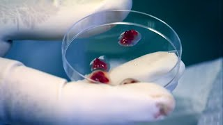 What Does Human Flesh Taste Like? | Secrets of Everything | Brit Lab
