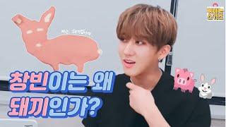 [스트레이 키즈] 창빈이는 왜 돼끼인가? 🐖🐇