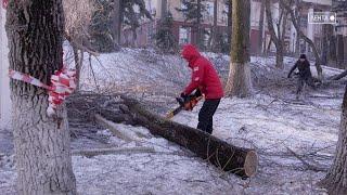 Обрезка деревьев: за или против?