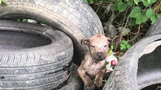 Puppy dumped in the woods