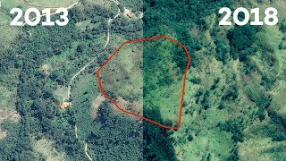 Brazil's Atlantic Forest six years on